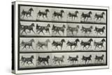 Carriage Driving  Plate 613 from 'Animal Locomotion'  1887