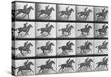 Galloping Horse  Plate 628 from Animal Locomotion  1887
