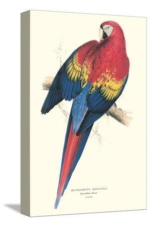 edward-lear-red-and-yellow-macaw-ara-macao