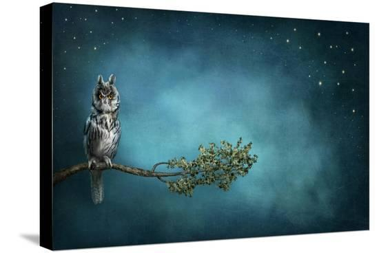 egal-owl-bird