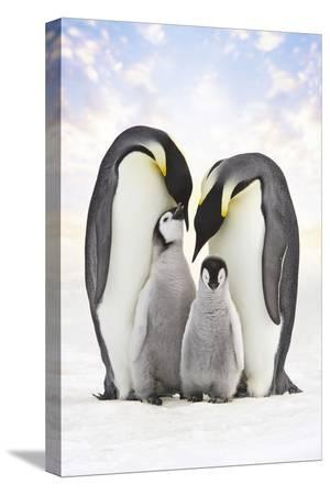 emperor-penguin-two-adults-with-two-chicks