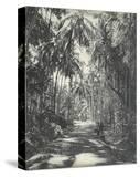 Road Near Colombo  Ceylon  February 1912