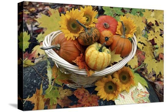 erika-craddock-harvested-pumpkins-and-sunflowers