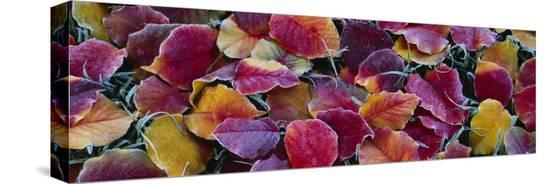 fallen-leaves-sacramento-california-usa