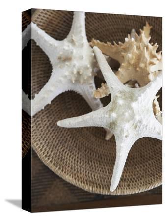 felix-wirth-starfish-in-a-basket