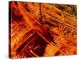 Fiery Orange Paintbrush Strokes