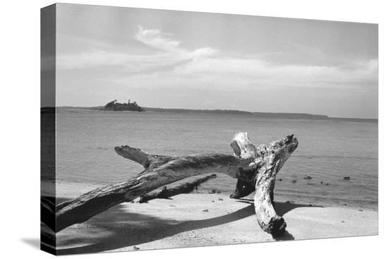 form-of-tree-trunk-at-beach