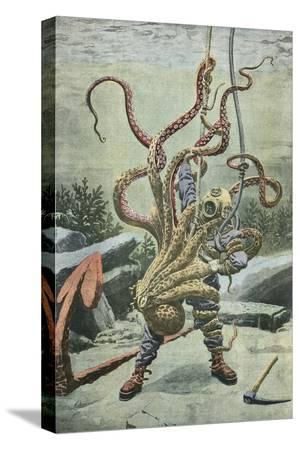 french-school-diver-attacked-by-an-octopus