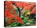 Garden with Maple Trees in Enkouin Temple  Autumn  Kyoto  Japan