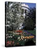 Flowers Blooming in the The White House Gardens