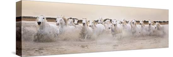 gillian-merritt-white-horses-of-the-camargue-galloping-through-water-at-sunset