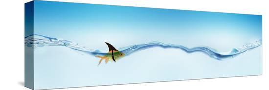 goldfish-wearing-shark-fin