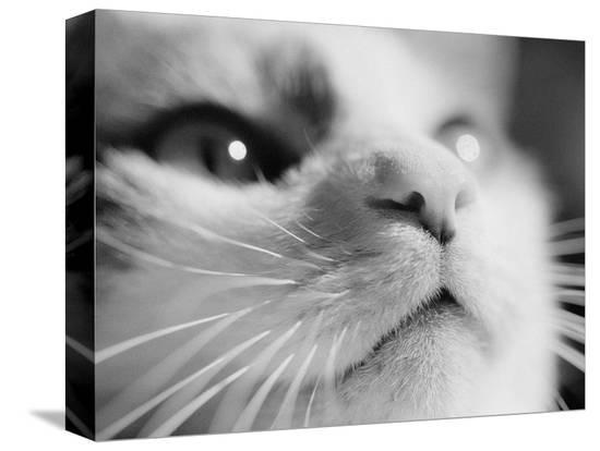 henry-horenstein-close-up-of-cat-s-face