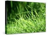 Grass Detail  Scotland