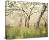 Quiet Orchard