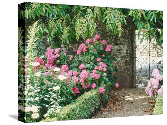 jacqui-hurst-pathway-and-gate-low-clipped-box-hydrangea