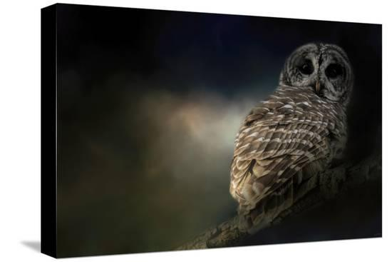jai-johnson-barred-owl-on-a-winter-night