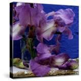 "Bearded Iris ""Blue Shimmer "" Purple and White Flowers in Glass Vase Against Blue Backdrop"