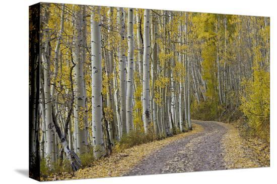 james-hager-dirt-road-through-yellow-aspen-in-the-fall