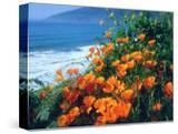USA  California  California Poppies Along the Pacific Coast