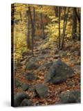Fall Foliage on the Tarn Trail of Dorr Mountain  Maine  USA