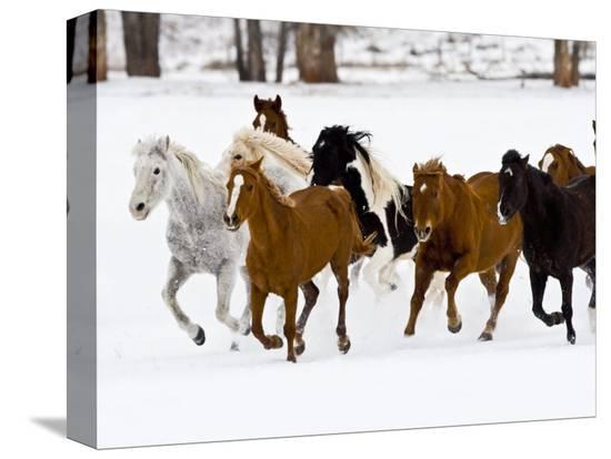 joe-restuccia-iii-running-horses-on-hideout-ranch-shell-wyoming-usa