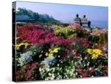 Couple Reading at Ocean Point Shoreline  Flowers in Foreground  Maine