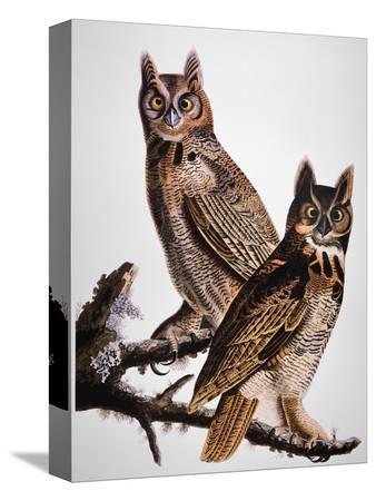 john-james-audubon-audubon-owl