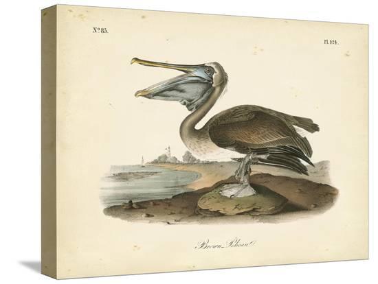 john-james-audubon-audubon-s-brown-pelican