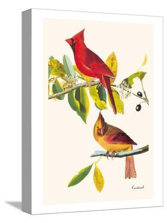 john-james-audubon-cardinal