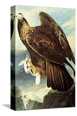 john-james-audubon-golden-eagle