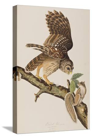 john-james-audubon-illustration-from-birds-of-america-by-john-james-audubon-1827-38