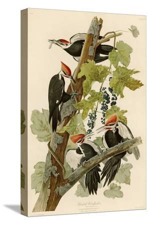 john-james-audubon-pileated-woodpecker