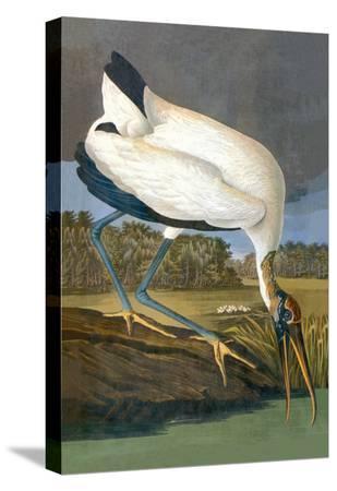john-james-audubon-wood-stork
