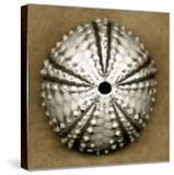 Deep Water Sea Urchin