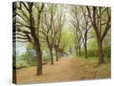 Path Through Tunnel of Trees at Monticello  Virginia  USA
