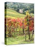 Italy  Tuscany Farm House and Vineyard in the Chianti Region