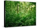 Jungle  Tikal  Guatemala