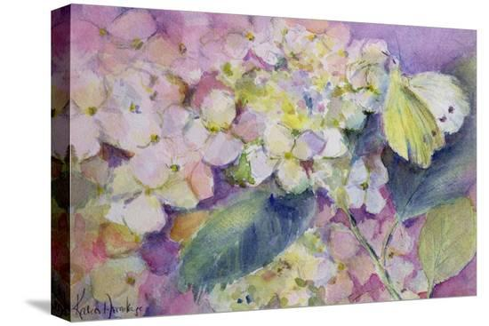 karen-armitage-pale-clouded-yellow-butterfly-colias-hyale-on-hydrangea