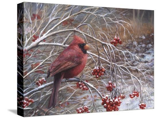 kevin-dodds-cardinal-and-berries