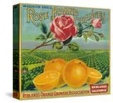 Rose Orange Label - Redlands  CA