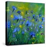 Blue Cornflowers 555160