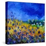 Blue Cornflowers 7741