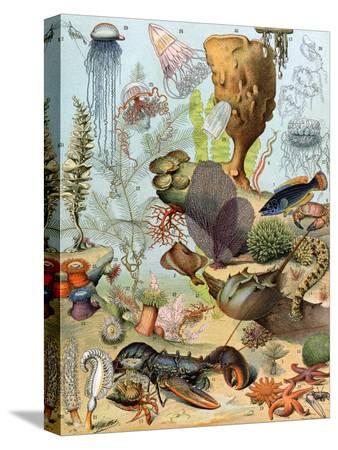 life-on-the-sea-floor-including-crustaceans-and-molluscs