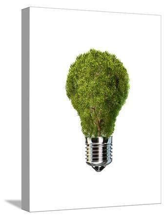 light-bulb-with-tree-inside-glass-isolated-on-white-background