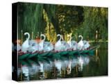 Swan Boats in Public Garden  Boston  Massachusetts