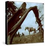 Rancher Leading Horse Across Field as Seen Through Branches of Fallen Tree  Trinchera Ranch