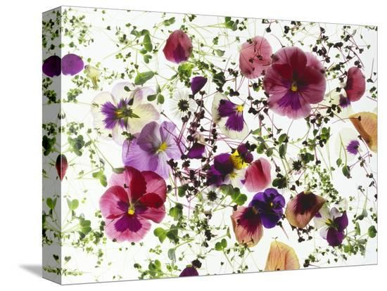 luzia-ellert-edible-flowers-and-sprouts