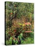 Red Bandstand Chair Under Old Apple Tree  October