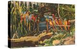 Macaws and Alligator  Florida